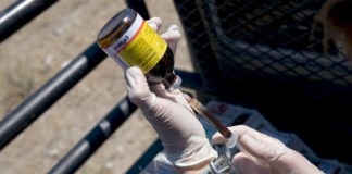 Antibiotics given to livestock force bacteria to evolve. Photo Credit: The Atlantic