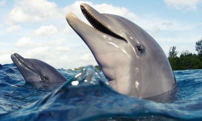 Dolphins, ocean, new species, humpback, water