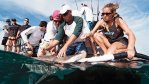 Water pump into sharks gills