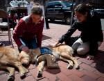 comfort parish dogs visit boston