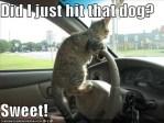 cat driving meme