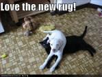 dog lays on cat rug meme