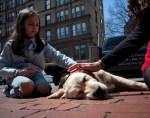 parish dogs comfort boston