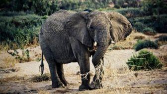 Check out Namibia's unique and abundant wildlife. Photo Credit: Austin-Lehman Adventures