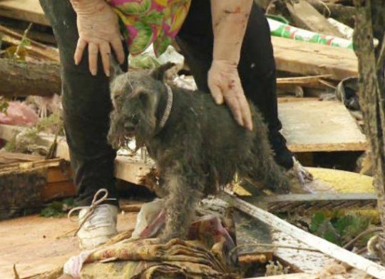 dog survives oklahoma tornado