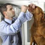 Dr. Kramer With Dog