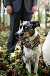 dog in outdoor wedding ceremony