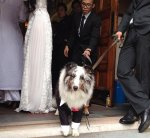 dog in suit at church after wedding