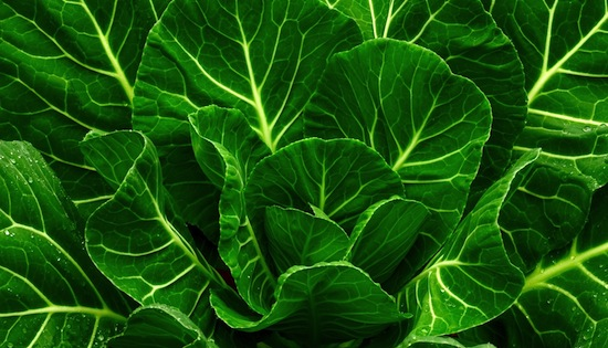 Collard greens does a body good. Photo Credit: Shutterstock
