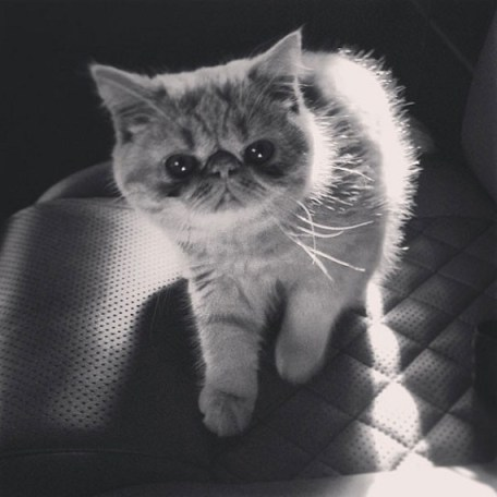 The Bieb's adorable new kitten looking straight into the camera. Photo Credit: Instagram