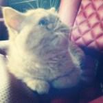 Bieber's New Kitten