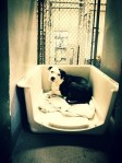 Precious rescued dog from Oklahoma shelter