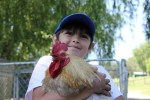 student holds emmett the rooster at catskill animal sanctuary