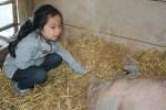 child says hello to peggy sue pig at catskill animal sanctuary
