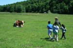 kids visit cow at catskill animal sanctuary