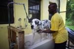 duke dog gets bath at tri-county humane society in florida