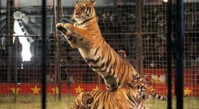 Columbia has passed a bill banning circuses from using wild animals in their show.