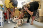 minnick family reunited with their dog tory at the central oklahoma humane society