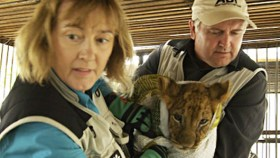 "ADI President Jan Creamer, and Vice President Tim Phillips rehabilitate circus lions in their film ""Lion Ark."" Photo Credit: Lion Ark"