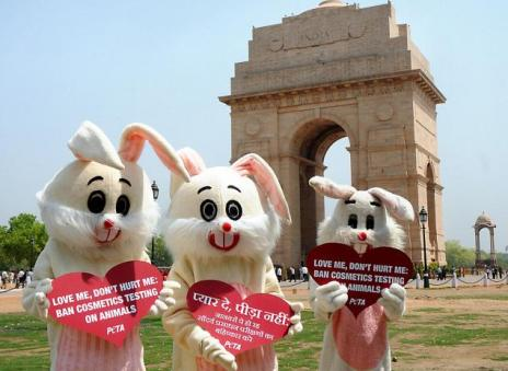 With PETA help, India has become the most recent country to ban cosmetic testing on animals. Photo Credit: The Hindu