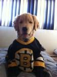 Ray Charles the Boston Bruins Dog