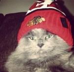 chicago blackhawks cat fan