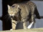 george osborne spy cat