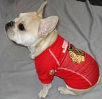 french bulldog chicago blackhawks dog hockey fan