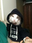 Spurs Cat