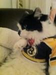 boston bruins stanley cup cat