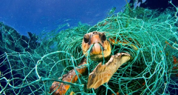 The combined efforts of the organizations hope terminate driftnet fishing, creating a better world for ocean life. Photo Credit: The Daily Catch