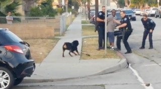 LAPD Hawthorne Police officer shoots and kills dog