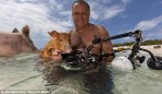 Swimming Pig Poses With Jim Abernethy