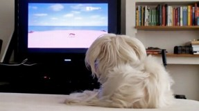 Dog TV will debut August 1st on DirecTV. Photo Credit: Dog TV