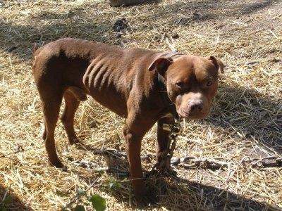 NYPD and ASPCA unite to prevent animal cruelty./Photo credit: peta2.com
