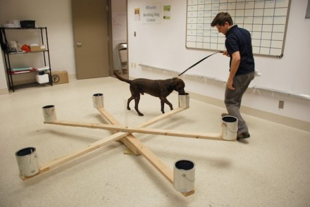 Researchers train dogs to sniff out odors that indicate the presence of ovarian cancer.