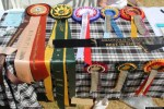 golden retriever festival dog show awards