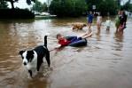 Dog Pulls Boy In Colorado Flood Water