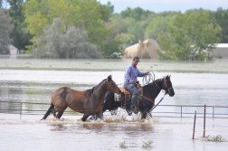A Colorado resident leads his horses to safety. Photo Credit: Doug Conarroe, North Forty News