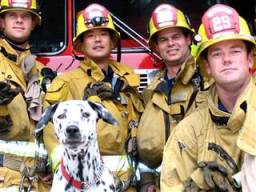Wilshire, a Dalmatian from Los Angeles, was a rescue adopted by the LA fire house after a family couldn't keep him./Photo credit: NBC via Ryan Penrod