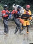 dog rescued during colorado floods