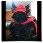 cat in devil pet halloween costume