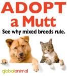 Adopt-a-Mutt- KALLIE