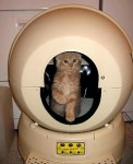 Cat in Spaceship litter box