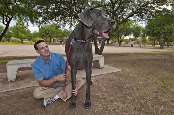 world's tallest dog, great dane giant george dies