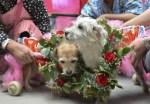 Happy Couple Rose Wreath