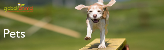 Puppy in Global Animal articles about cats, dogs, and pets.