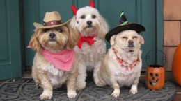 Rusty, Dinky, and Sunny as a cowboy, devil, and a witch!