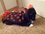 dino kitty cat dinosaur halloween costume