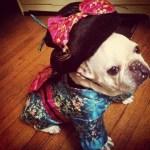 PET HALLOWEEN COSTUMES & DOG COSTUMES FOR HALLOWEEN: French bulldog as Geisha girl dog costume